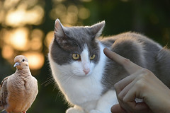 Be Nice! (swong95765) Tags: cat pussy hand bird animal dive bokeh scold point