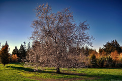 Changing Seasons (Kevin_Jeffries) Tags: spring blossom newzealand nature nikon d90 landscape flickrsbest new colour scenery seasons bloom natural flowers jeffries flower