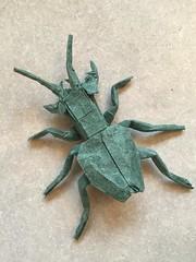 Manticora scabra (Baltorigamist) Tags: origami manticora scabra tiger beetle carabidae