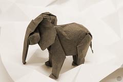Elephant (Danielle Verbeeten) Tags: olifant folding paper vouwkunst vouwen mabona origami elephant sipho danielle