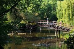 Ogród botaniczny Uniwersytetu Wrocławskiego / The Botanical Garden of the University of Wroclaw (PolandMFA) Tags: polska poland wrocław wroclaw atrakcje attractions ogródbotaniczny botanicalgarden