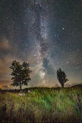 Two Trees & The Milky Way  Aug 2016 (Dooj Brawls Photography) Tags: trees milkyway sky stars nightsky nightphotography nightime dark skies galloway park dumfries canon eos 6d samyang 14mm f28