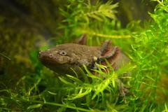 Smile (PollyPhotografy) Tags: little sweety dragon say smile animal nature fauna ngc