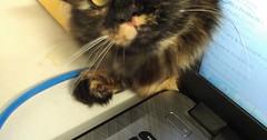 Hi meet my assistant she is professional!! via http://ift.tt/29KELz0 (dozhub) Tags: cat kitty kitten cute funny aww adorable cats