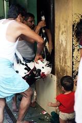 Eid Bakri - Mumbai (Tanya Nagar) Tags: india festival digital canon blood asia islam eid photojournalism goat mumbai slum eidaladha bakri eidbakri