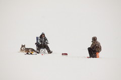 Ice Fishing 2 (LongInt57) Tags: winter people dog pet pets brown white lake fish snow canada man cold men ice dogs sports water animal animals sport mammal person frozen fishing bc okanagan lakes freezing valley snowing kelowna mammals drill drills auger augers blinkagain