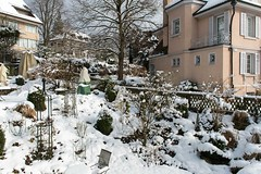 Our garden getting rid of its winter clothes (for the moment) (Rosarian49) Tags: winter snow gardens trellis azalea zrich urbangarden citygarden cornuskousa hirslanden rosarian49