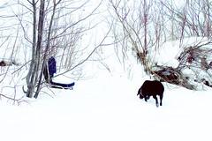 Two chairs (bratli) Tags: blue winter dog snow canada ice creek edmonton chairs brodie 45 alberta ravine outofplace bratli blackmud 113picturesin2013