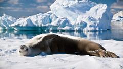 IMG_3686 (ravas51) Tags: blue snow ice antarctica iceberg icebergs southshetlandislands gadventures