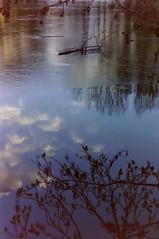 dutch winter (1) (bertknot) Tags: winter reflections reflecting mirror dutchwinter mirroring weerspiegeling dewinter winterinholland reflecties weerspiegel winterinthenetherlands hollandsewinter winterinnederlanddutchwinter