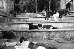 casa dos gatos / house cats (Shawnee Ispala) Tags: cats white house black branco casa bravo gatos preto lindo dos gato linda e felino lindos