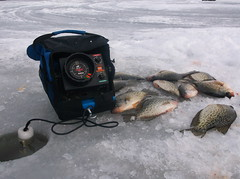 Petenwell crappies (Dan Small Outdoors) Tags: adamscounty icefishing crappies dansmall outdoorsradio petenwellflowage jessequale greenwaterswalleyes petenwellpark