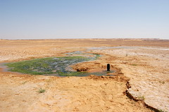 Leakage from and plant colonization at water well - northern Sudan (UNEP Disasters & Conflicts) Tags: sudan africa unepmission development peace conflict environment climatechange drought unep unenvironment
