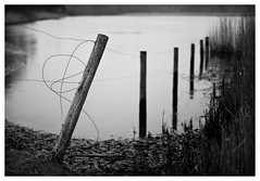 River posts (Nick Caro - Photography) Tags: blackandwhite fence river reeds 50mm mono post caro posts bnw wwwnickcarophotographycouk