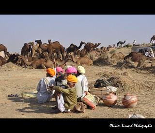 Pushkar Camel Fair 2012