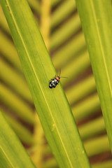 stairs to heaven (Juan Miko Photo) Tags: naturaleza insectos fauna bug flora escalera cucarron