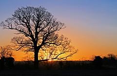 Cardington Sunrise Tree (Rob Felton) Tags: sky tree silhouette sunrise skyscape bedford horizon bedfordshire felton lumen cardington robertfelton