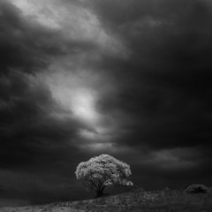 White Tree II (nlwirth) Tags: white tree monochrome clouds dark infrared yup infraredconvertedcamera nlwirth
