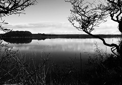 Camel estuary (cornishdjango photography) Tags: trees bw nature river blackwhite cornwall olympus camel cameltrail micro43rds epl3