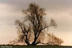 Alter Baum (diwe39) Tags: baum