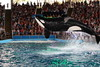 "San Antonio Water World - Samu Show Scene • <a style=""font-size:0.8em;"" href=""https://www.flickr.com/photos/7877146@N06/8580307647/"" target=""_blank"">View on Flickr</a>"
