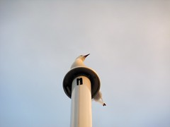 Seagull (Summer Skyes 11) Tags: sky bird beach clouds seagull perch perching newzealandbeaches