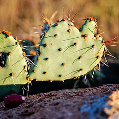 Love Hurts (1lkygrl1) Tags: cactus mountains love oklahoma photography wildlife wichita refuge