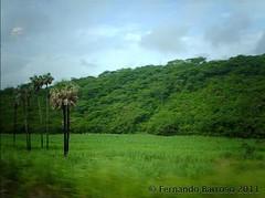 palmera quieta (Fernando Barroso) Tags: mexico palmtree vegetation palmera vegetacion huasteca sanluispotosi potosina cascadadetamul streamzoo
