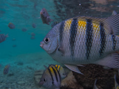 Profile (spencer_r_allen) Tags: park travel vacation fish mexico island paradise underwater snorkel olympus cancun reef tough waterproof garrafon islamujeres skindiving tg4