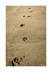 Playeando... (ngel mateo) Tags: ngelmartnmateo ngelmateo caladesanpedro lasnegras cabodegata njar almera andaluca espaa playa arena pisadas perro dorado huella andalusia spain sand beach footprint footprints golden dog summer verano playeando