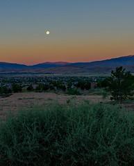 Setting Moon (4x5 photos) Tags: nevada sunrise moonset desert