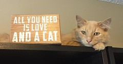 My friends cat was laying on the work I was trying to do so I told him to get lost This is where he decided to lay. via http://ift.tt/29KELz0 (dozhub) Tags: cat kitty kitten cute funny aww adorable cats
