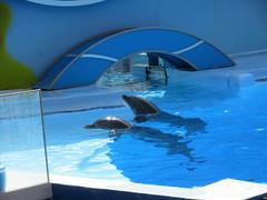 IMG_0974 (L.Karnas) Tags: algarve summer september 2016 portugal albufeira sommer zoomarine dolphin dolphins