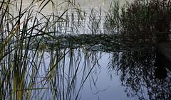 REFLEXE (Joan Biarns) Tags: banyoles llac estany reflexe reflejo pladelestany girona catalunya canon7d lago