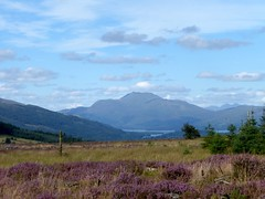 Ben Lomond, viewed from Darleith Muir (luckypenguin) Tags: scotland lochlomond helensburgh balloch johnmuirway heather