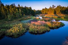 Natural Selection (DJawZ) Tags: sunset cranberry bogs water pond trees pines blue clear sky summer nj new jersey outdoor serene calm