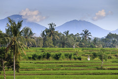 Rizires et Mont Agung (Bali) (Voyages Lambert) Tags: beautiful tourism nonurbanscene padangbali ubud mtagung irrigationequipment hut beauty scenics growth greencolor cultures famousplace south tropicalclimate agriculture nature ruralscene outdoors bali indonesia asia crop palmtree tree ricecerealplant cerealplant plant volcano mountain hill valley plantation ricepaddy terracedfield field landscape water farm road tower food unitednationseducational scientificandculturalorganization tegalalang