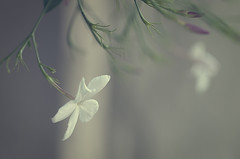 Nature (Graella) Tags: nature macromondays flor flower macro naturaleza blur desenfoque planta