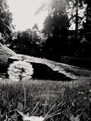 Fais un voeu et... (Claeryss) Tags: wish paris nature black white tree sun