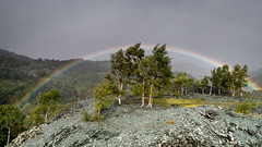 Hodge Close Rainbow (.Brian Kerr Photography.) Tags: rainbow naturallandscape cumbria hodgeclose lakes lakedistrict birch tree weather landscape photography outdoorphotography rain appicoftheweek