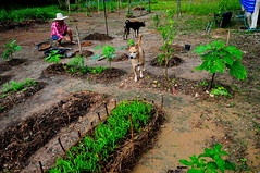 ,, Working Woman ,, (Jon in Thailand) Tags: blue green jungle river cobra dog dogs k9 k9s bodyguards no1wife workingwoman garden theworm boneyboy nikon d300 nikkor 175528 vegetable vegetablegarden pink red hat worker onguard alert dirt clay pottingsoil compost vegetables female thai thaifemale