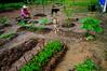,, Working Woman ,, (Jon in Thailand) Tags: blue green jungle river cobra dog dogs k9 k9s bodyguards no1wife workingwoman garden theworm boneyboy nikon d300 nikkor 175528 vegetable vegetablegarden pink red hat worker onguard alert dirt clay pottingsoil compost vegetables female thai thaifemale