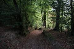 IMG_7189 (nicole.schmidtova) Tags: photography czechrepublic canon canon60d czech countryside nature simply autumn fall