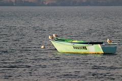 Bracciano Boat (Edimur) Tags: seagulls lake lago boat barca gabbiani lazio bracciano lagodibracciano