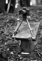 A Photographer's Last Resting Place (Trojan_Llama) Tags: park wood bw green slr film monochrome cemetery woodland memorial bob burial plus 135 ilford fp4 biodegradable 125 colney