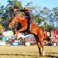 El tostao (Eduardo Amorim) Tags: horses horse southamerica caballo uruguay cheval caballos cavalos prado montevideo pferde cavalli cavallo cavalo gauchos pferd hest hevonen chevaux gaucho 馬 américadosul montevidéu häst uruguai gaúcho 말 amériquedusud лошадь gaúchos 马 sudamérica suramérica américadelsur סוס südamerika jineteada حصان άλογο americadelsud gineteada ม้า americameridionale semanacriolla semanacriolladelprado eduardoamorim semanacriolladelprado2011 ঘোড়া