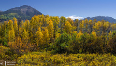Golden Aspens, West Elk Mountains (James L. Snyder) Tags: autumn trees red orange usa sunlight mountains green fall texture colors leaves yellow horizontal clouds forest gold golden woods colorado colorful warm glow afternoon natural bright native country rich fine stripe band peak sunny bluesky somerset row brush september foliage nationalforest clear mount aspens glowing rockymountains rough deciduous multicolored bushes shrubs luminous brilliant radiant sylvan rugged gleaming textured backlighting dainty cirrus thicket quaking crystalclear thriving therockies 2011 gunnisonnationalforest populustremuloides gunnisoncounty westelkmountains gunnisonriverbasin westbeckwithpeak mountgunnison northforkdistrict