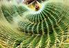 Coiling Cactus (Annette LeDuff) Tags: matthaeibotanicalgardens nature 06162012 annarbormi annetteleduff photoannetteleduff 01132012 cactus leduffcameraart lumen mosca shockofthenew orientalland artforeveryone makemewonderlevel1 visionaryartsgallery1 greenscene thegalaxy exoticimage awesomeandinterestingplants awesomelycreativeforedinei hugyourcacti spinstaraward marinebubbleaward open worldheartaward floresrobadasdelosjardinesdequilmes ümithopeesperança blinkagain cactisucculentsandbulbplants level1autofocus level2autofocus redlevelno1 chariotsofartistslevel1 chariotsofartistslevel2 thelooklevel1red thelooklevel2yellow thelooklevel3orange thelooklevel4purple chariotsofartistslevel3 yellowlevelno2 greenlevelno3 thelooklevel5green chariotsofartistslevel4 thelooklevel6blue bluelevelno4 floorprimus whitelevelno5 chariotsofartistslevel5 thelooklevel7white thelooklevel8gold super~sixstage1bronze creativephotocafe blacklevelno6 musictomyeyes super~sixstage2silver natureassuchandabstract myabsolutefavoritepictures vigilantphotographersunite vpu2 vpu3 vpu4 vpu5 vpu6 vpu7 vpu8 vpu9 greeneden natureasabstractartist vpu10