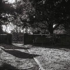 The Shadowed Path (ROB KNIGHT photography) Tags: england bw 6x6 film monochrome darkroom mediumformat mono blackwhite unitedkingdom 120format monochromatic wentworth ilfordhp5 hp5 lubitel166 processed ilford filmphotography robknight anologue peakimaging axeman3uk robknightphotography wwwrkphotographiccom robrkphotographiccom