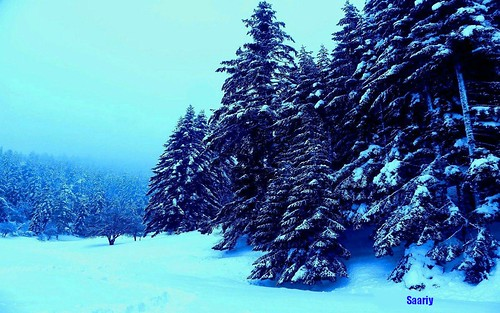 FANTASTIC WINTER  FOREST VIEW NEAR LAKE ABANT.........!